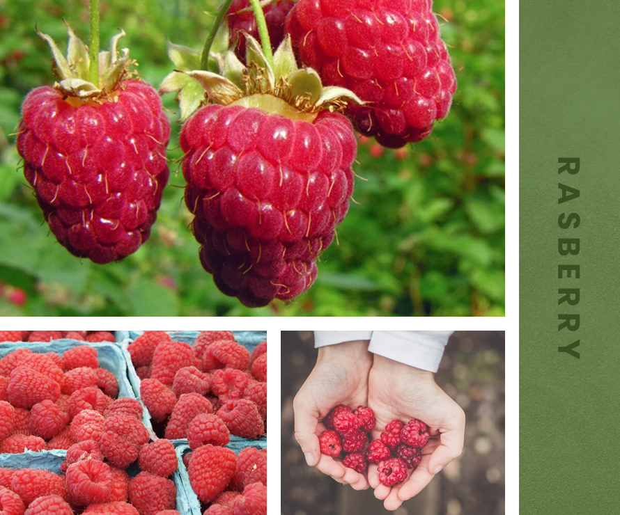 Raspberry_